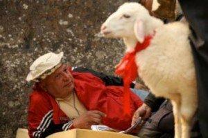 hrant-white-lamb