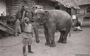 armjanskij-film-soldat-i-slon